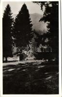Baile Tusnad, Pine trees, Tusnádfürdő, Fenyvesek