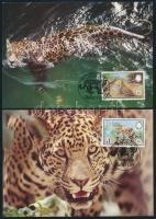WWF: Jaguar set on 4 CM, WWF: Jaguár sor 4 db CM-en