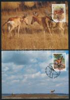 WWF: Antilopok sor 4 db CM-en WWF: Antelopes set on 4 CM