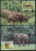 WWF: Erdei elefánt sor 4 db CM-en WWF Forest elephants set 4 CM