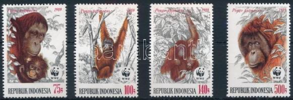 WWF: Orangután sor WWF Orangutan set
