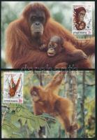 WWF: Orangután sor 4 db CM-en WWF Orangutan set 4 CM