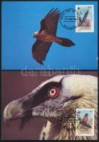 WWF: Saskeselyű sor 4 db CM-en WWF: Vulture set on 4 CM