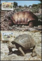 WWF: Turtle set on 4 CM WWF: Teknős sor 4 db CM-en