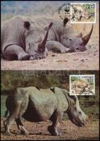 WWF: Rhinos 4 CM WWF: Orrszarvúk 4 CM