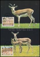 WWF Gazelle 4 CM, WWF; Gazellák 4 CM