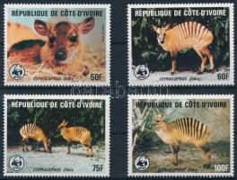 WW; Zebra duiker set, WW; Zebra-bóbitásantilop sor