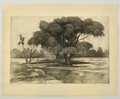 Artner Ferenc (1904-1981): Öreg fűzfa, rézkarc, papír, jelzett, 26,5×38 cm