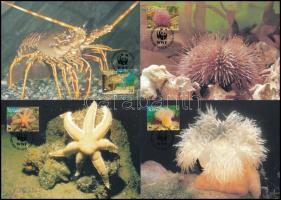 WWF Sea animals set 4 CM WWF: Tengeri állatvilág 4 db CM