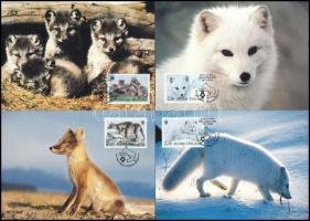 WWF: Sarki róka 4 db CM-en WWF Arctic fox 4 CM