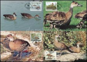 WWF Wild ducks set on 4 CM WWF Vadkacsák 4 db CM-en