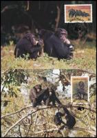 WWF  Chimpanzee set on 4 CM WWF Csimpánzok sor  4 db CM-en