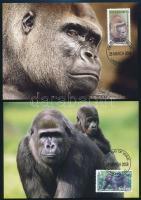 WWF Gorilla set on 4 CM, WWF Gorilla sor 4 db CM-en