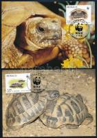 WWF Turtle set on 4 CM WWF Teknős sor 4 db CM-en