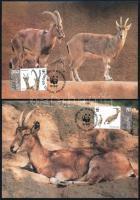 WWF: rocky goat on 4 CM WWF: Bezoár kőszáli kecske 4 db CM