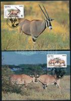 WWF East African oryx set on 4 CM, WWF:Kelet-afrikai nyársas bak 4 db CM-en