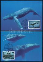 WWF Humpback whale 4 CM WWF: Púpos bálna 4 db CM-en
