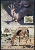 WWF Gazelle set on 4 CM, WWF Gazella sor 4 db CM-en