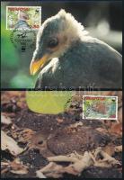 WWF Jungle hens 4 CM WWF: Dzsungel tyúk 4 db CM-en