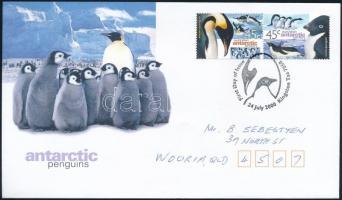 Pingvin pár Penguin pair
