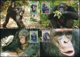 WWF Chimpanzee set on 4 CM WWF: Csimpánz sor 4 db CM-n