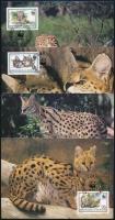 WWF Serval set on 4 CM, WWF: Szervál sor 4 db CM-en