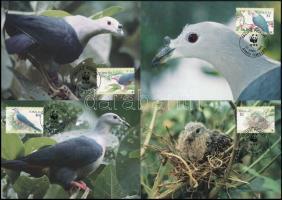WWF Emperor pigeon cam set 4 CM, WWF Bütykös császárgalamb sor 4 CM