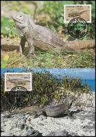 WWF: Iguana set on 4 Maximum Card WWF: Leguán sor 4 db CM-en