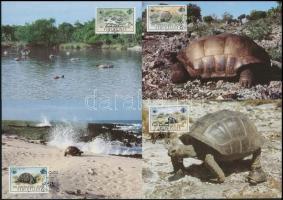 WWF: Turtles set on 4 CM, WWF: Teknősbékák sor 4 db CM-en