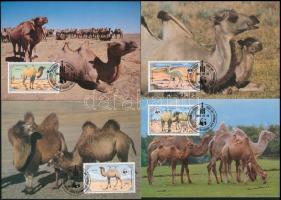WWF: Camel set on 4 CM, WWF: Teve sor 4 db CM-en