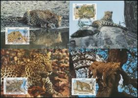 WWF leopard set CM WWF leopárd sor CM