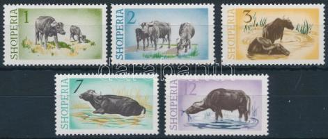 Vízibivaly sor Water Buffalo set