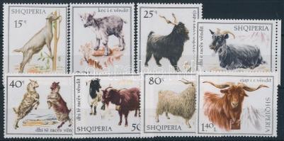 Házi kecskék sor Goat set