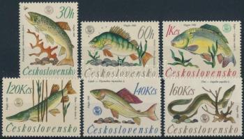 Fish set Halak sor
