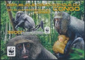 WWF: Owl-faced monkey block, WWF: Hamlyn cerkóf blokk
