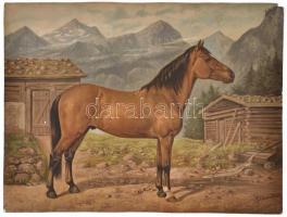 1903 Haflinger ló. Richard Schoenbeck festménye után készült színes litográfia, Kunstverlag Eduard Eggebrecht, Pferderassen sorozat 32. tábla., kis sarokhiánnyal, széleinél tűnyomok, 44,5x59 cm / Haflinger horse, chromolithography, with small corner damage, pinholes, 44,5x59 cm