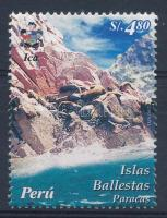 Ballestas Islands, seals, Ballestas szigetek, fókák