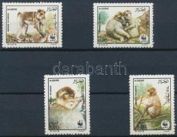 Monkeys set Majmok sor