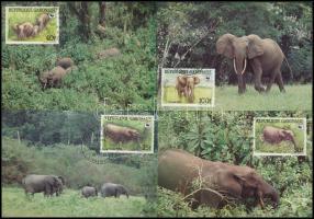 WWF Forest elephant set 4 CM WWF: Erdei elefánt sor 4 db CM - en