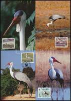 WWF: Crane bird on 4 CM, WWF: Darumadár 4 db CM-en