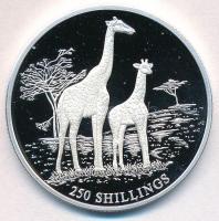Szomália 1999. 250Sh Ag Két zsiráf T:PP Somalia 1999. 250 Shilling Ag Two Giraffes C:PP Krause KM#105