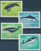 Marine mammals set, Tengeri emlősök sor