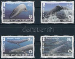 WWF Blue whale set, WWF: Kék bálna sor