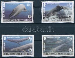 WWF Blue whale set WWF: Kék bálna sor