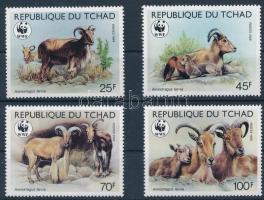 WWF Barbary sheep set, WWF: Sörényes juh sor