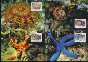 WWF Starfish set 4 CM, WWF Tengeri csillag sor 4 CM-en