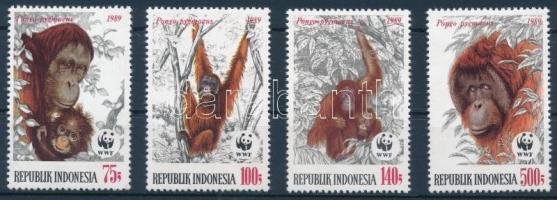 WWF Orangutan set WWF: Orangután sor