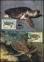 WWF: Turtles set on 4 CM, WWF: Teknős sor 4 db CM-en