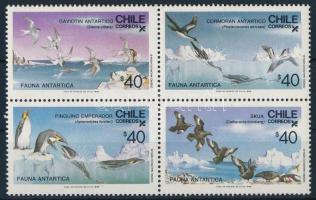 Antarctic Birds Az Antarktisz madarai