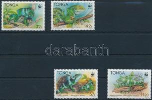 Banded iguana set, Szalagos leguán sor